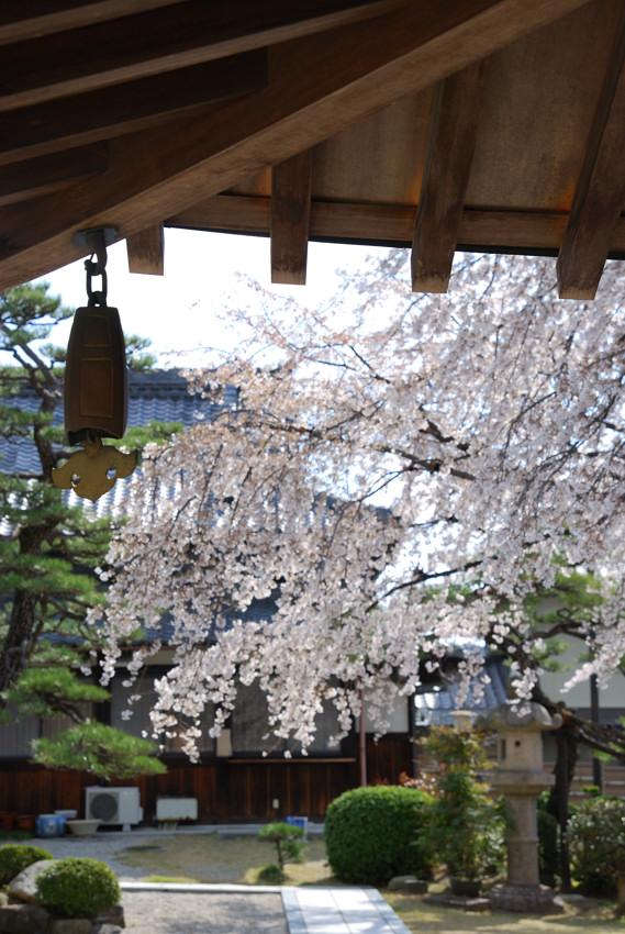 名古屋、杁中、香積院2_c0171945_19384438.jpg