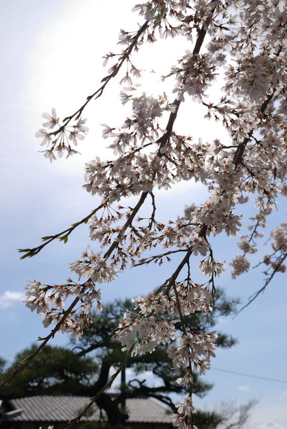 名古屋、杁中、香積院2_c0171945_19392332.jpg