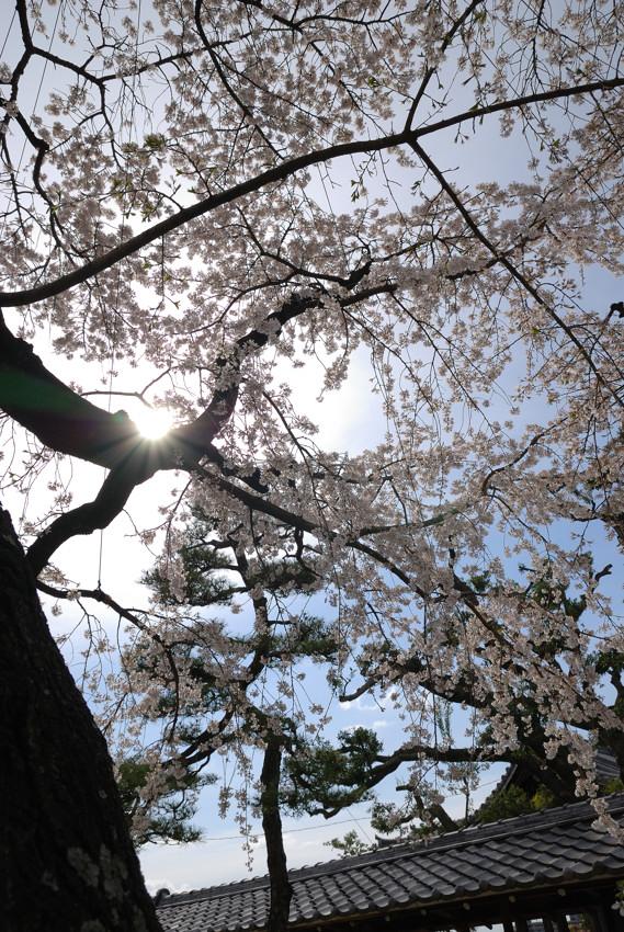 名古屋、杁中、香積院2_c0171945_19394893.jpg