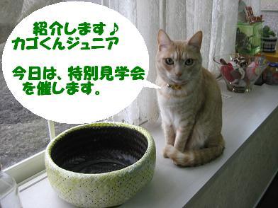 モカの新カゴくん、見学会_b0151748_22565360.jpg