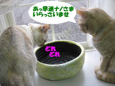 モカの新カゴくん、見学会_b0151748_2257813.jpg