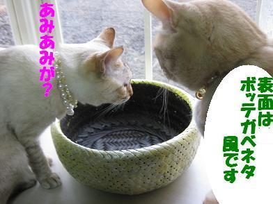 モカの新カゴくん、見学会_b0151748_23115421.jpg