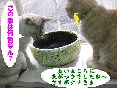 モカの新カゴくん、見学会_b0151748_2315869.jpg