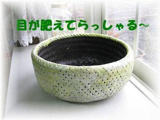 モカの新カゴくん、見学会_b0151748_23191774.jpg