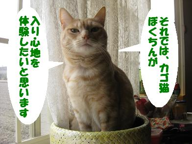 モカの新カゴくん、見学会_b0151748_232998.jpg