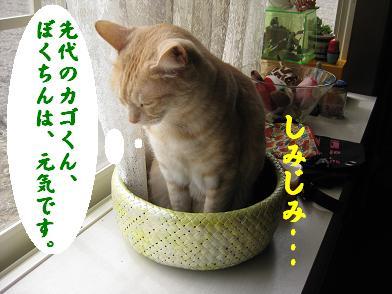 モカの新カゴくん、見学会_b0151748_2333113.jpg
