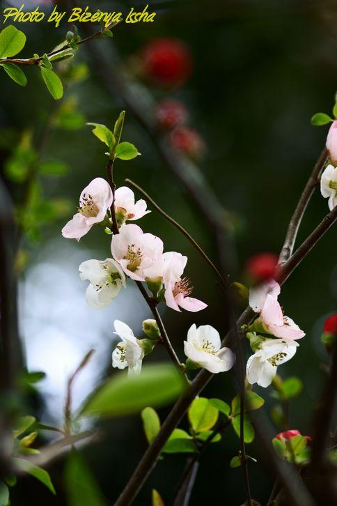 春の花たち_d0086248_1128233.jpg
