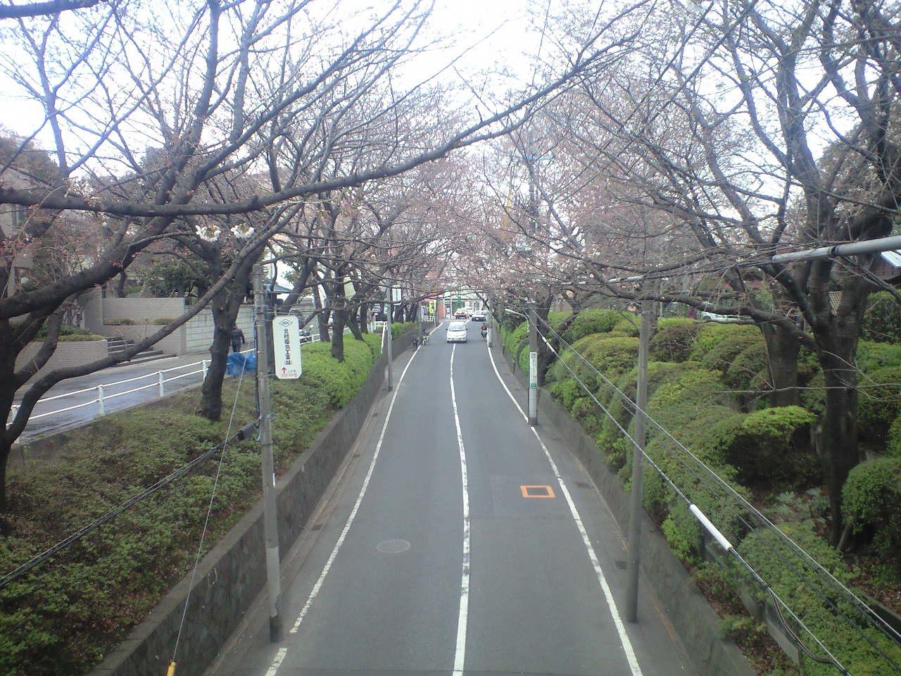 第1回例会後、桜坂でお花見_b0160959_1182084.jpg