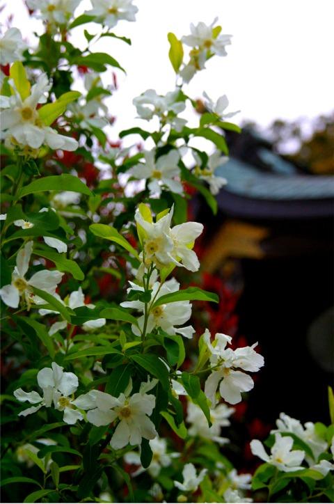 桜・・・写真・・・散策_f0051464_10364389.jpg