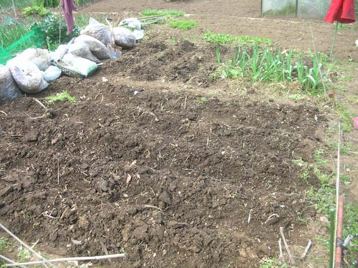 サトイモ、ジャガイモの植え付け完了(09・3・25)_c0014967_551041.jpg