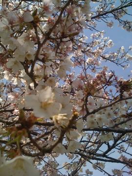春ですね_e0095468_1534079.jpg