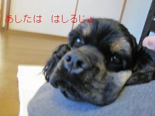 b0169072_21408.jpg