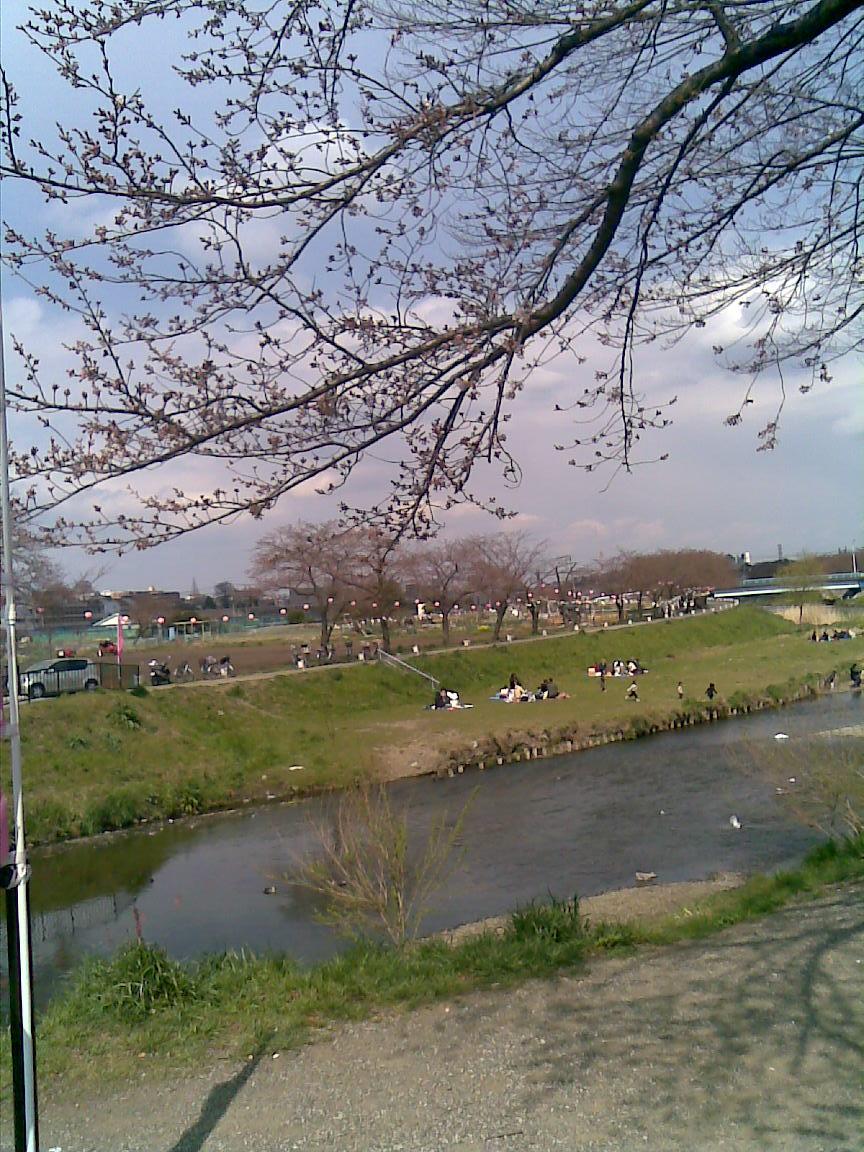 うちの近所の桜_d0061678_16916100.jpg