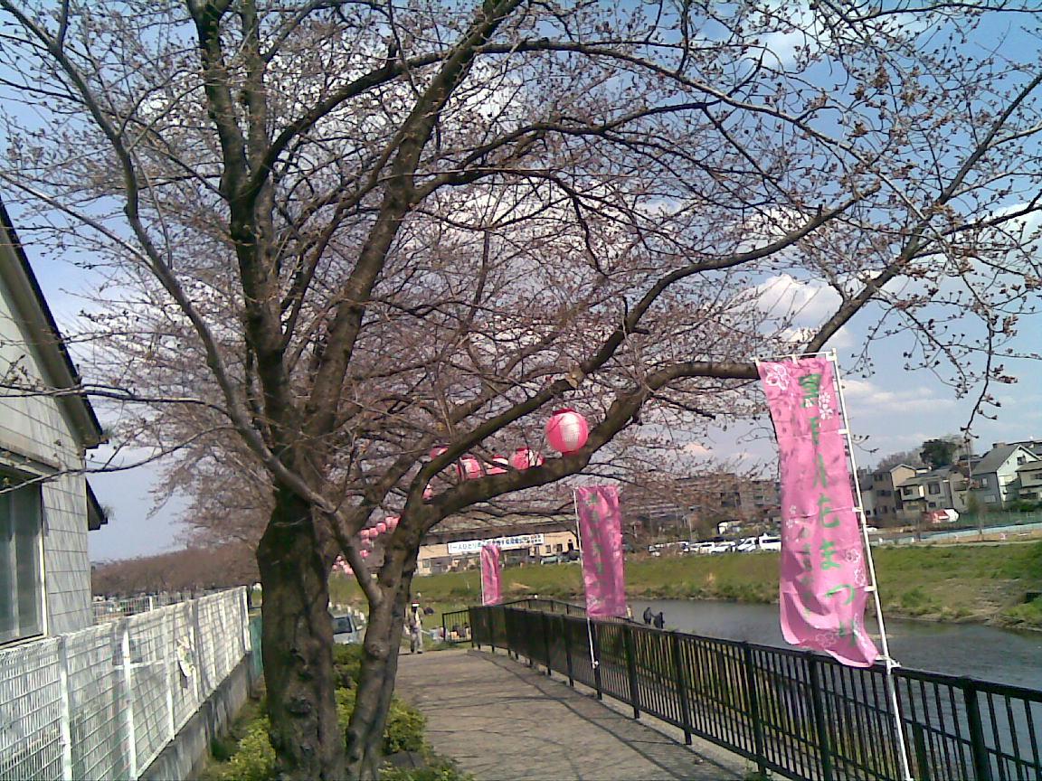 うちの近所の桜_d0061678_1694775.jpg