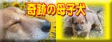 b0136683_10475293.jpg
