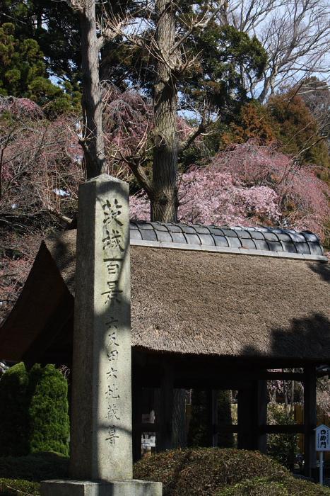 六地蔵寺の枝垂桜 水戸市 2009年3月29日_e0143883_1863991.jpg