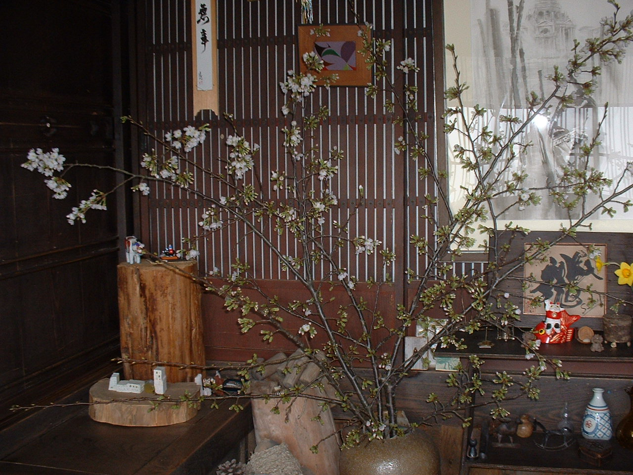 桜だより_c0165589_15173548.jpg