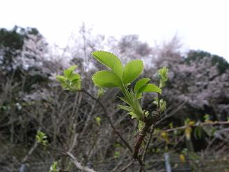 3月の終わりの庭_d0087595_11281573.jpg