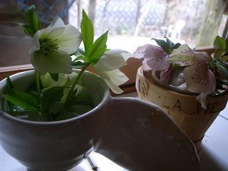 3月の終わりの庭_d0087595_1129032.jpg