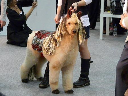 ジャパンペットフェア2009 最終回<Pet Fasion Week編>_e0160595_19323156.jpg
