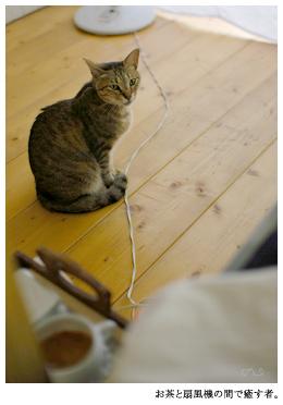 気持ちを整えるためにもやっぱり針を持つ。夏の王子は風の吹きぬける場所からそっと猫監督。