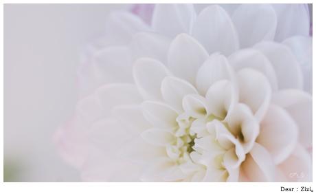 ジジびへのお花。 女子カメラvol.8のレンズモニタの機会で,TAMRON SP AF90mm F/2.8 Di MACRO 1:1。