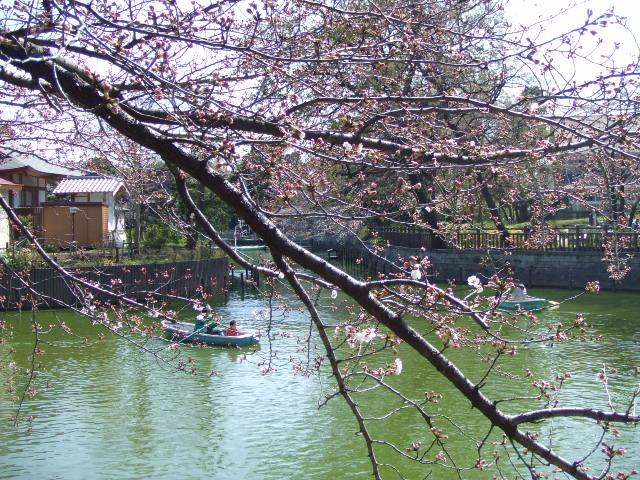 桜まつり@碑文谷公園_e0123104_7154159.jpg