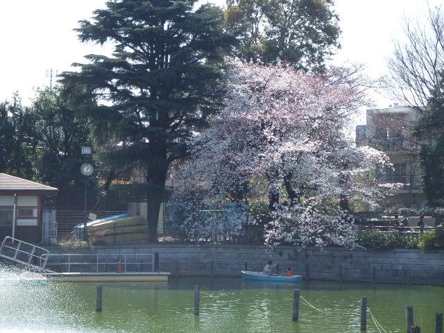 桜まつり@碑文谷公園_e0123104_7155618.jpg