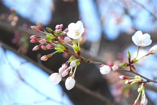 春・・・届きました_c0116714_154693.jpg