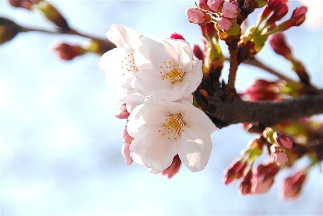春・・・届きました_c0116714_23264271.jpg