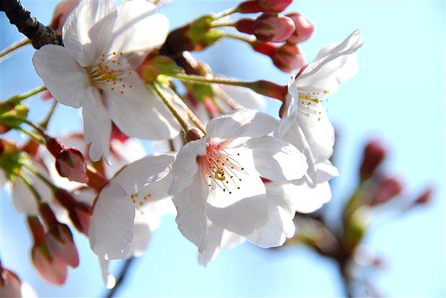 春・・・届きました_c0116714_2329154.jpg