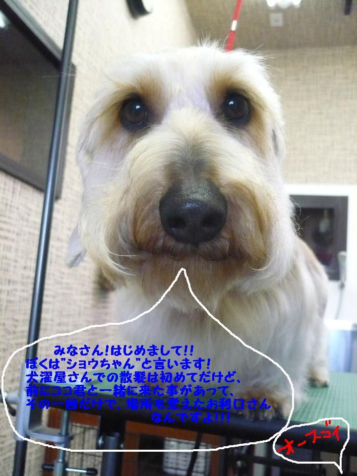 b0130018_18105254.jpg