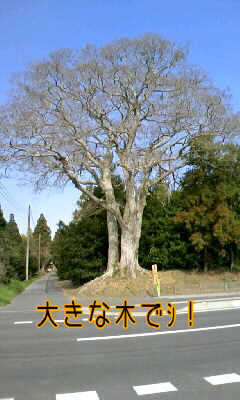 b0166620_1357591.jpg