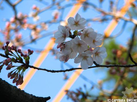 春遠からじ_f0138828_117239.jpg