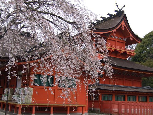 枝垂れ桜_b0089338_23333630.jpg