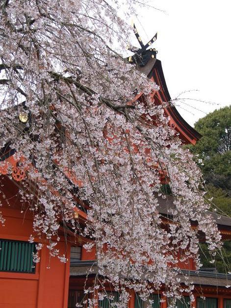 枝垂れ桜_b0089338_23335387.jpg