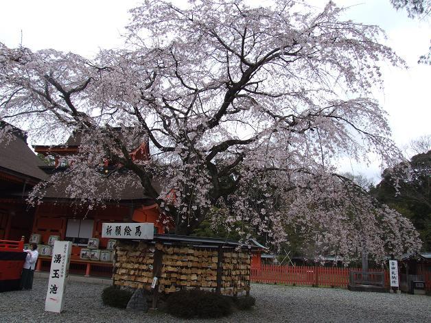 枝垂れ桜_b0089338_23335834.jpg