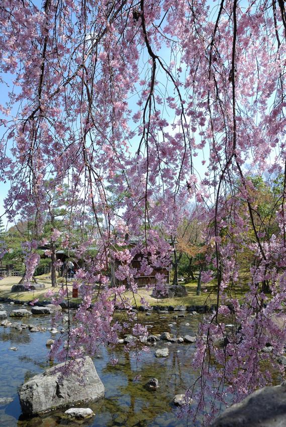 白鳥庭園_c0171945_2205866.jpg