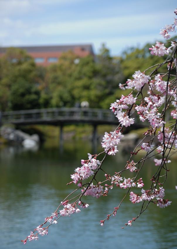 白鳥庭園_c0171945_2252965.jpg