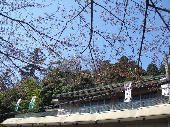 2009年3月30日 かねよの「桜」実況中継_c0078659_1724989.jpg