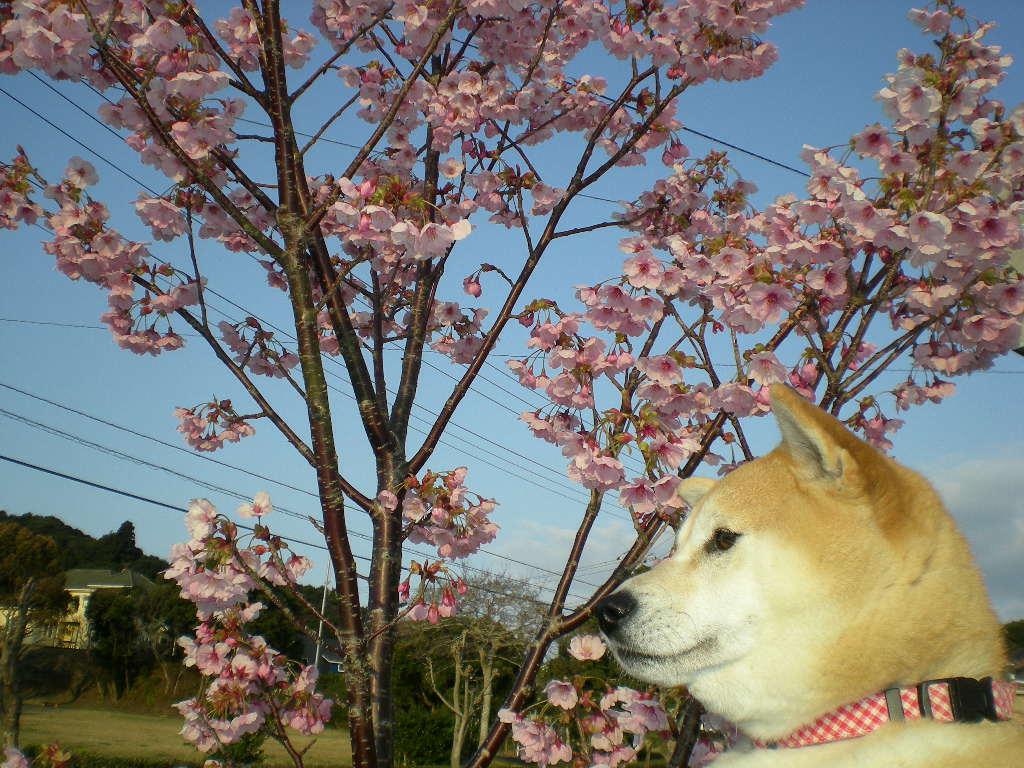 2009年3月30日(月)こころちゃんが愛ちゃんを舐めちゃってる!_f0060461_1910592.jpg