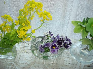 菜の花_d0006467_18365042.jpg