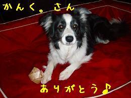 ありがとう♪_b0003270_199481.jpg