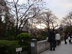 桜の下で_e0149596_214419.jpg