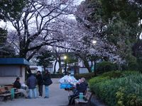 桜の下で_e0149596_2151174.jpg