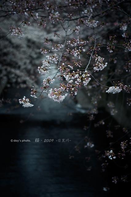 目黒川・桜景色 #02_e0117517_23391812.jpg