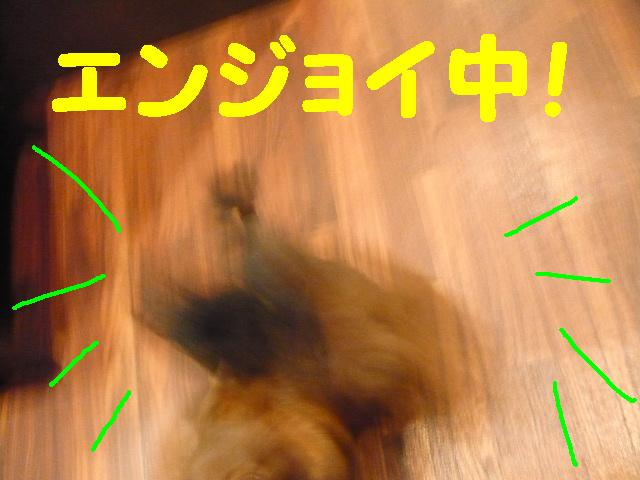 b0130018_14563444.jpg