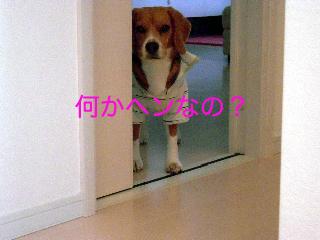 b0104420_17264789.jpg