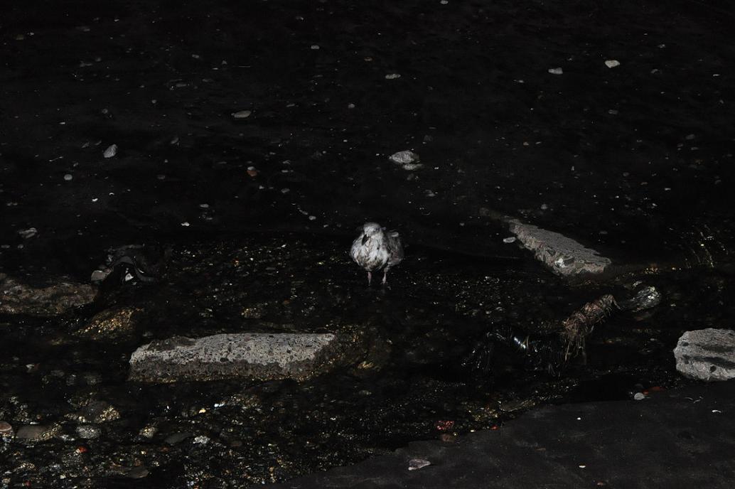 釣具を呑み込んだ カモメ No.1_d0039021_18484236.jpg