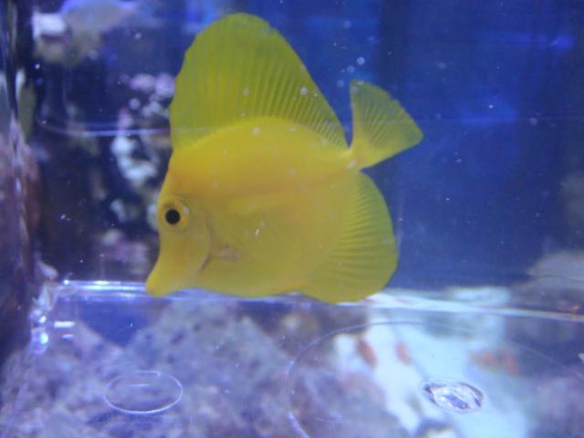 海水魚・サンゴ_f0189122_12585714.jpg